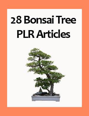 bonsai tree plr articles